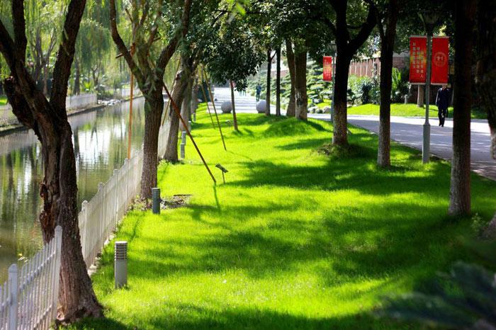 河畔草地静谧悠然.jpg